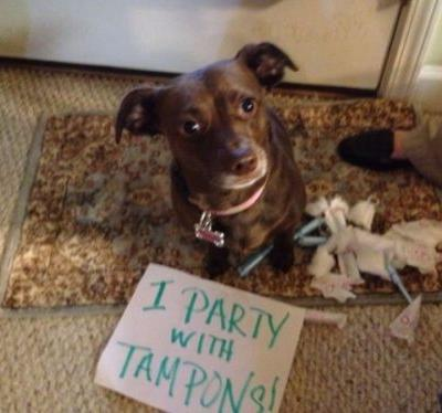 """What Should You Do If Your Dog Ate A Tampon Or Other """"Personal Item""""?"""