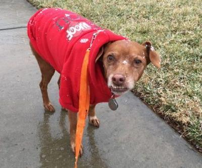 9 Cold-Weather Tips for Dogs and Dog Owners