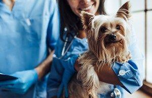 What You Need to Know About Heartworm Symptoms in Dogs