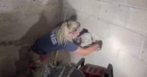 Runaway Dog Gets Trapped In Neighbor's Garage Wall For 5 Long Days