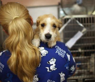 Good News: U.S. Animal Shelters Report Rise in Applications Amid Coronavirus Outbreak