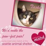 Looking for love? Meet your match at the Seattle Animal Shelter