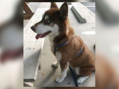 'He's getting a big hug': Dog missing for 18 months in New York found in Florida