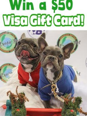 Holiday Season $50 VISA Gift Card Giveaway