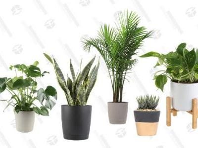 Welcome a Few More Plants into Your Home With this One-Day Amazon Sale