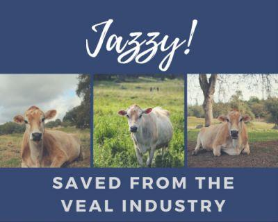 Meet Jazzy and find out how she made her way to sanctuary at