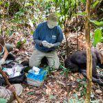 Are Threatened Wildlife Species Safe from COVID-19?