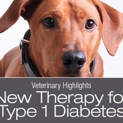 Veterinary Highlights: Reversing Type 1 Diabetes in Dogs without Insulin?
