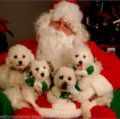 Here's Where Can Get Pictures of Your Dog with Santa