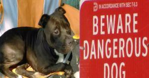 """City Of Dallas Euthanizes A """"Dangerous"""" Dog that Never Once Attacked Anyone"""