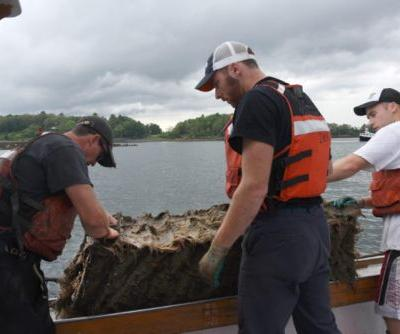 Farmed Scallops are Coming to a Plate Near You