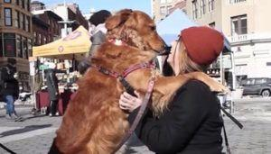 New York Dog Stands On The Street Corner To Give Hugs To Strangers