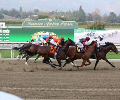 Officials suspend horse racing at Santa Anita following 21 horse deaths