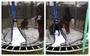 Dog Gets On Snow-Covered Trampoline With His Human & His Reaction Is Hilarious