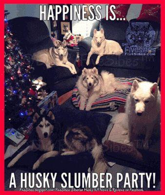 FiveSibes FlashbackFriday Returns! Remembering a House Full of Huskies