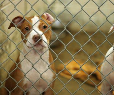 Woman brings animal shelter's kill rate from 100 percent to 0 percent
