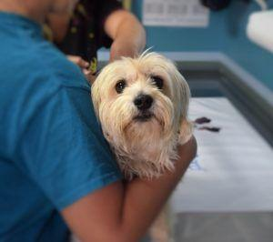 4 Simple Steps to Choosing the Right Veterinarian for Your Dog And You