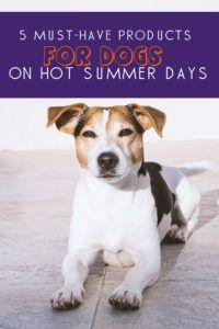 5 Cooling Products for Dogs on Hot Summer Days