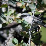 Another surprise bird out of Florida Canyon