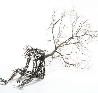 Intricate Metal Root Sculptures by Sun-Hyuk Kim Take Human Form