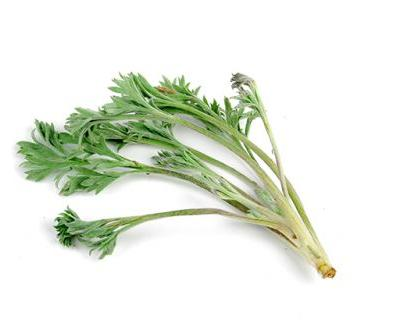 Prevent bone loss from osteoporosis with capillary wormwood