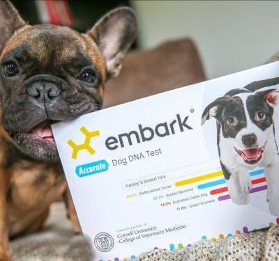 This dog DNA test helped me figure out what breed my rescue dog is - and what health conditions to watch out for