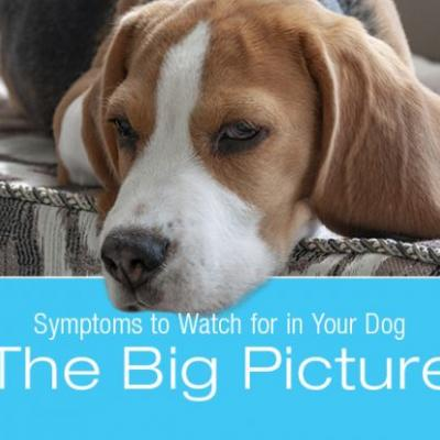 Symptoms to Watch for in Your Dog: The Big Picture