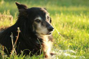 Giving This To Your Collie Daily Could Help Alleviate Painful Skin Allergies