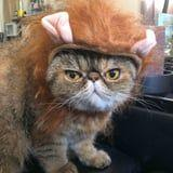 Just 24 Photos of Kitties in Ridiculous Halloween Costumes