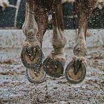 Protected: Equine Clinical Case Challenge: Ulcerated Skin Mass of the Fetlock