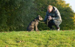 10 Tips All First-Time Dog Owners Need To Read