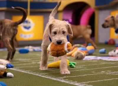 How to watch the 2020 Puppy Bowl and Kitten Bowl
