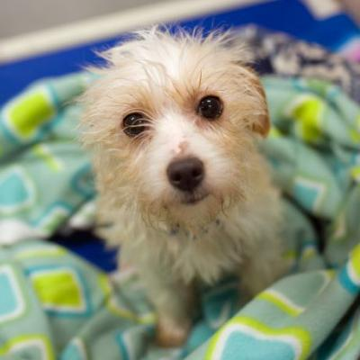 """SWEET N LOW"" lovable little terrier type"