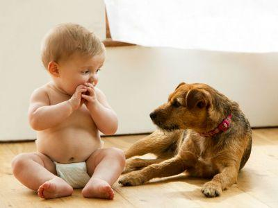 Another reason to get that cute puppy: Pets make for healthier babies