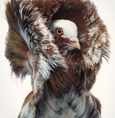 Photographer Tim Flach Highlights Unusual and Endangered Birds in Striking Portraits