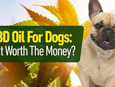 CBD Oil for Dogs: Is It Worth the Money?