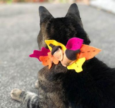 Sundays With Tabs the Cat, Makeup and Beauty Blog Mascot, Vol. 519