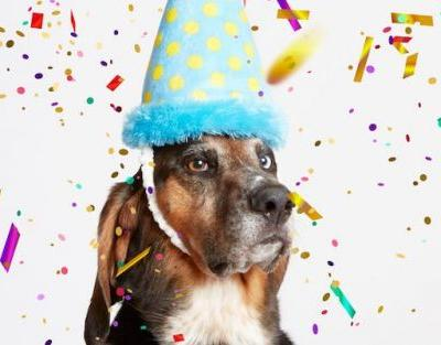 What Gifts Do I Get For My Dog's Birthday?