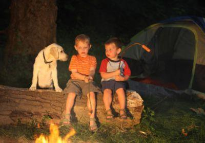 The Complete Guide to Pet Friendly Campgrounds in America's National Parks
