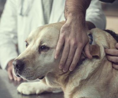 Heartbroken vets begs humans to stay with pets when they're being put down: 'Do not leave them'