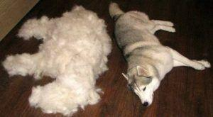 Tired of Excessive Shedding? Try Adding This One Ingredient To Your Dog's Diet