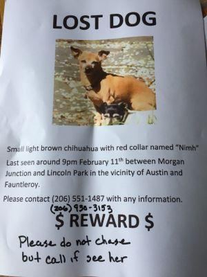Lost Dog in West Seattle