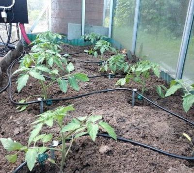 Raspberry Pi irrigation system for your crops