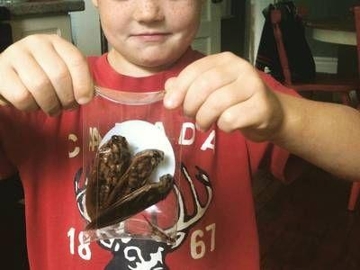The future of edible insects depends on kids