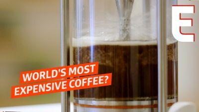 Making the Most Expensive Coffee in the U.S