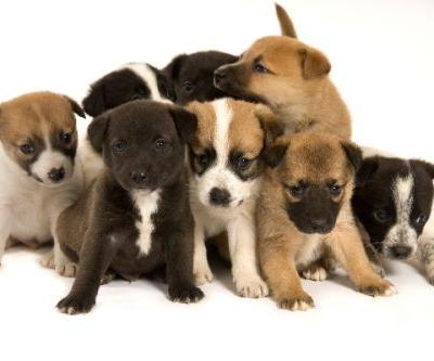 Can a Litter of Dogs Have Different Fathers? Let's Talk Dogs and Superfecundation