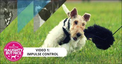 """Real-Life Impulse Control For NBN Dogs: """"Whip-It"""" Game!"""