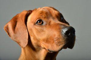 10 Reasons Pet Parents Are Switching Their Dogs To Krill Oil