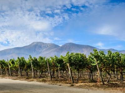 Here's Everything You Need to Know About Chilean Wine