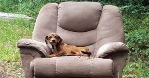 Abandoned Puppy Waits In Owner's Discarded Armchair Until Rescued